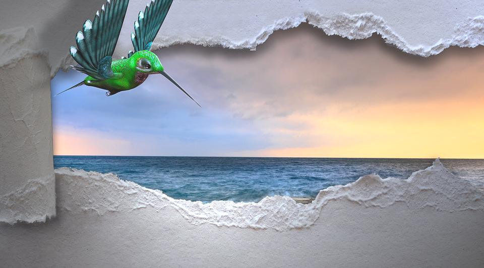 hummingbird-3347576_960_720